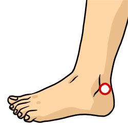 Acupressure Point - Bladder 60