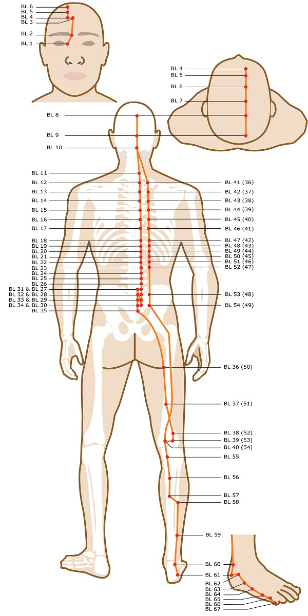 Acupuncture Points Guide – View All Meridians – Smarter Healing