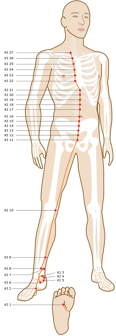Acupuncture Meridian - Kidney